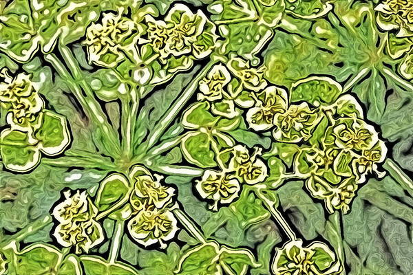 Green Spurge 1 Art Print