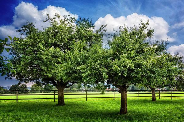 Photograph - Green Summer Pastures by Debra and Dave Vanderlaan