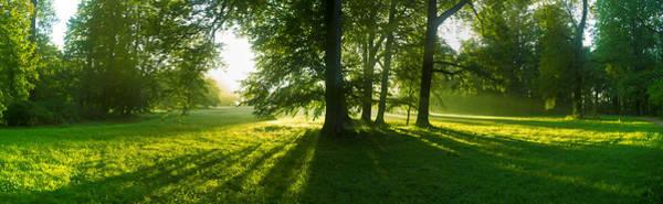 Photograph - Green Sunrise by Sun Travels