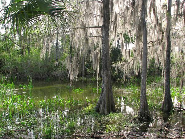 Green Swamp Art Print