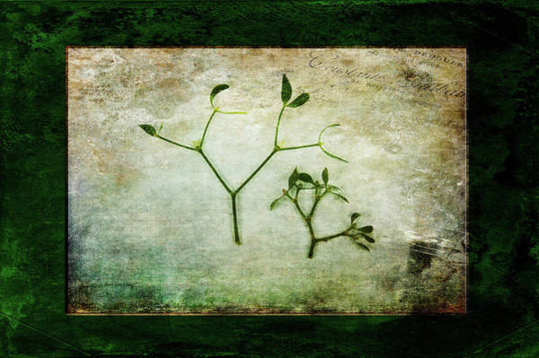 Photograph - Green Tradition by Randi Grace Nilsberg