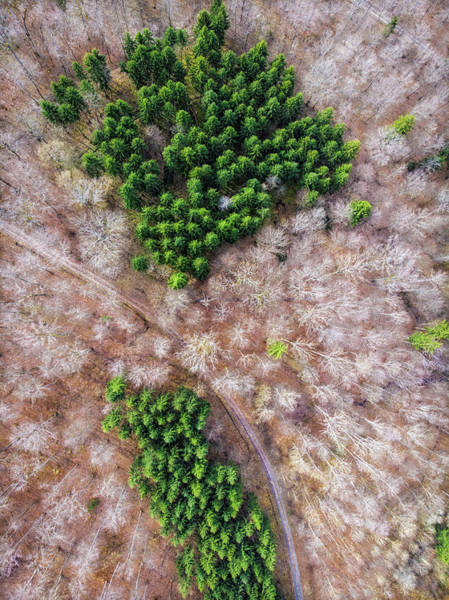 Photograph - Green Trees And Bare Trees From Above by Matthias Hauser