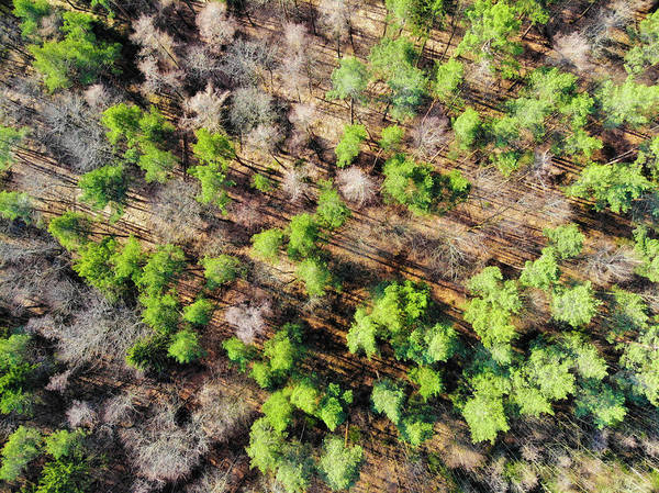 Photograph - Green Trees In Forest Aerial View by Matthias Hauser