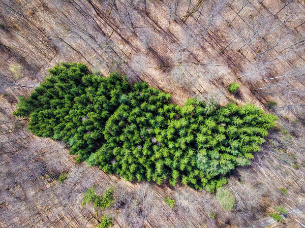 Photograph - Green Trees Island In Forest Drone Photography by Matthias Hauser