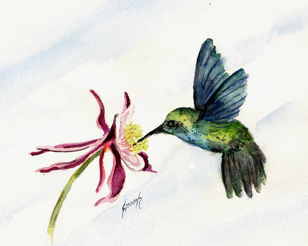 Painting - Green Violet-ear Hummingbird by Sam Sidders