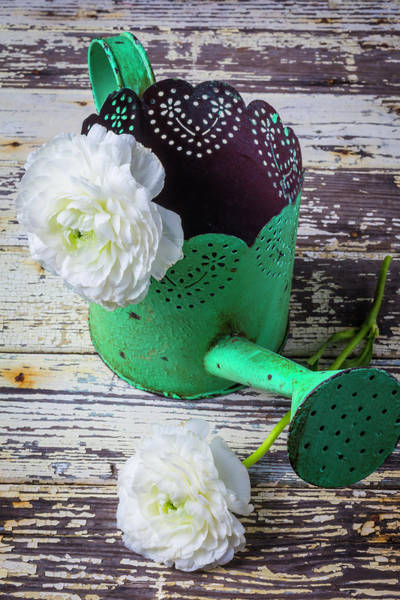Ranunculus Photograph - Green Watering Can And Ranunculus by Garry Gay