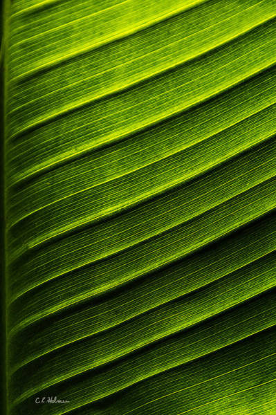 Photograph - Green Waves by Christopher Holmes