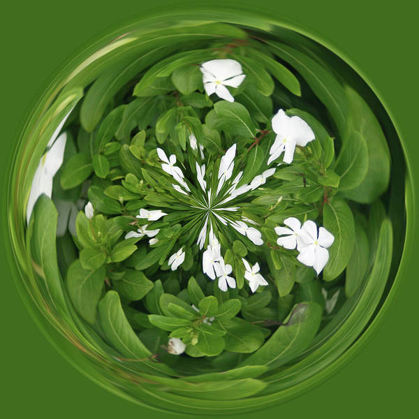 Photograph - Green-white Orb by Bill Barber
