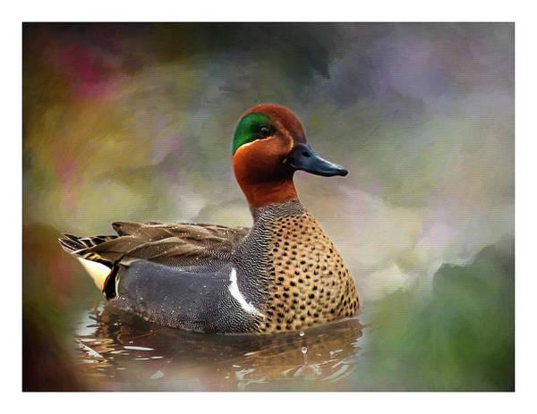 Marsh Bird Digital Art - Green-winged Teal Drake by John Williams