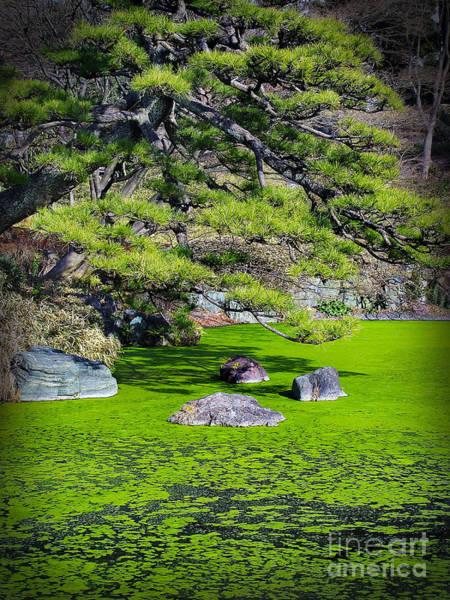 Photograph - Green Winter by Eena Bo