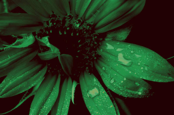 Photograph - Green With Envy by Donna Bentley