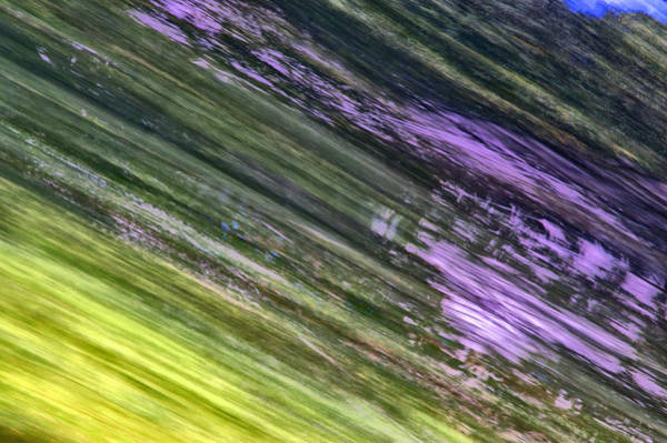 Photograph - Green With Some Purple by Dick Pratt