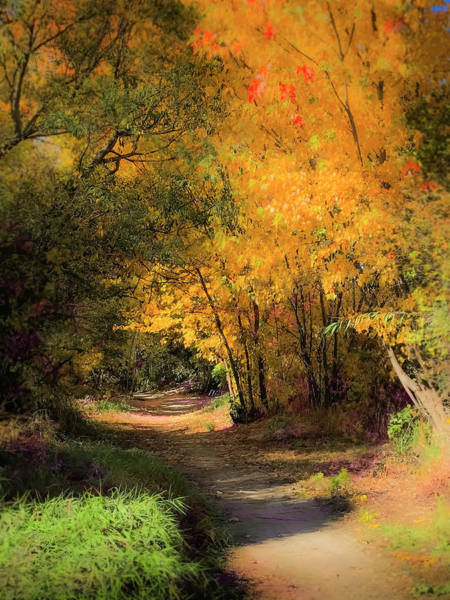 Photograph - Greenbelt Autumn by Mark Mille
