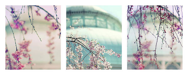Photograph - Greenhouse Blossoms Triptych by Jessica Jenney