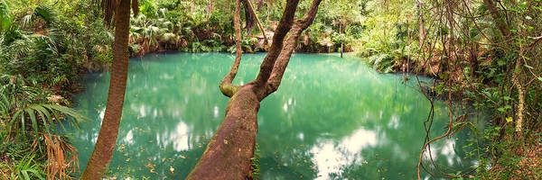 Photograph - Green Springs Florida by Stefan Mazzola