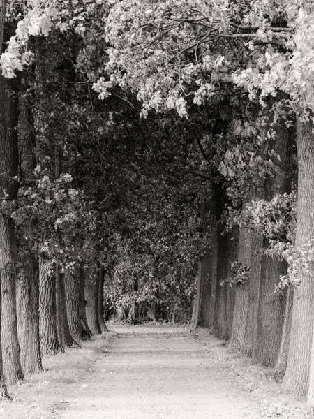 Greeted By Trees Art Print