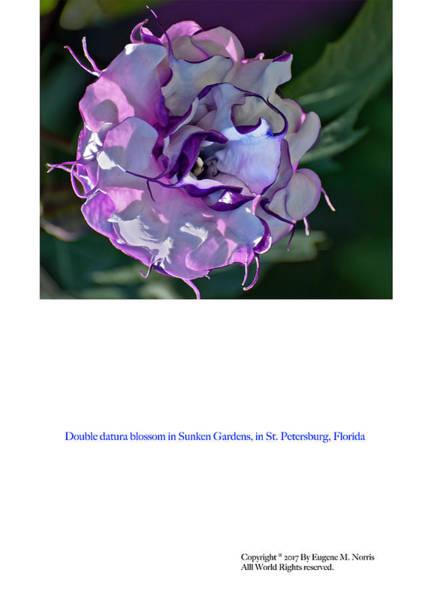 Digital Art - Greeting Card 02 by Gene Norris