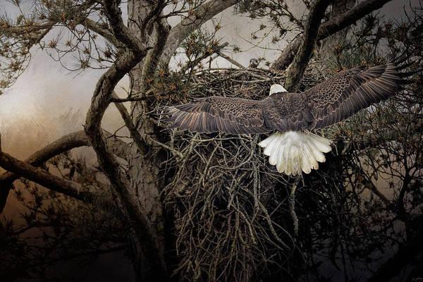 Eagle In Flight Photograph - Greeting Mama by Jai Johnson