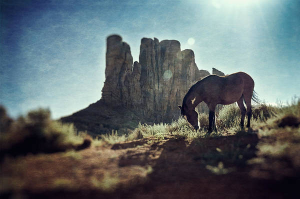 Photograph - Greetings From The Wild West by Radek Spanninger