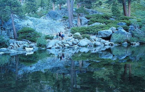 Photograph - Greetings In The Back Country by Sean Sarsfield