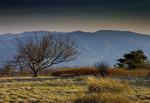 Bald Mountain Photograph - Gregory Bald - Great Smoky Mountains National Park - Tennessee by Brendan Reals