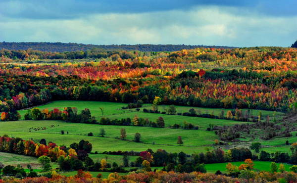 Photograph - Grey County Ontario Autumn by Andrea Kollo
