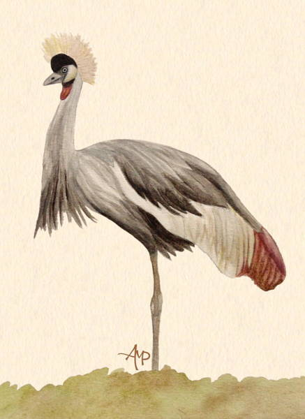 Painting - Grey Crowned Crane by Angeles M Pomata