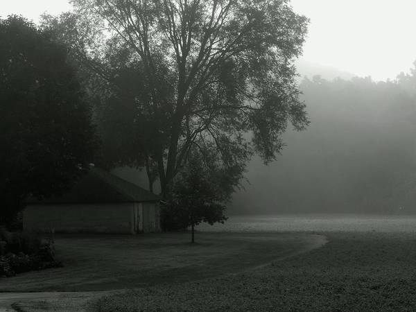 Photograph - Grey Farm Mist Morn by Wild Thing