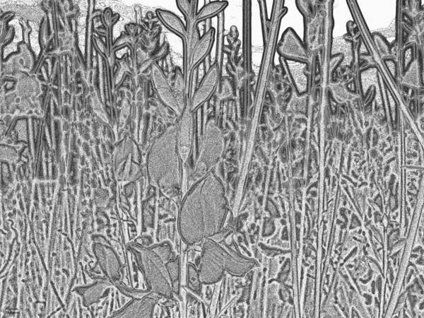 Digital Art - Grey Flowers by Augusta Stylianou