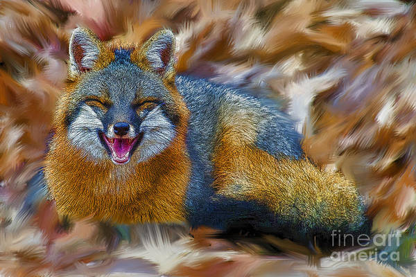 Photograph - Grey Fox Smiling Artistic by Dan Friend