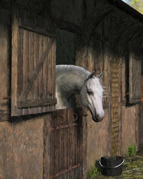 Grey Horse In The Stable - Waiting For Dinner Art Print