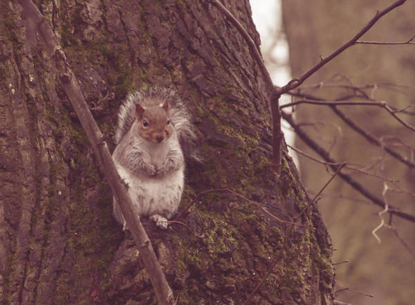 Photograph - Grey Squirrel In Autumn Park O by Jacek Wojnarowski