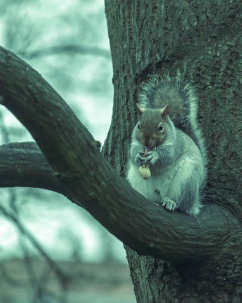 Photograph - Grey Squirrel In Autumn Park S by Jacek Wojnarowski