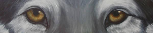 Wall Art - Painting - Grey Wolf by Darlene Green