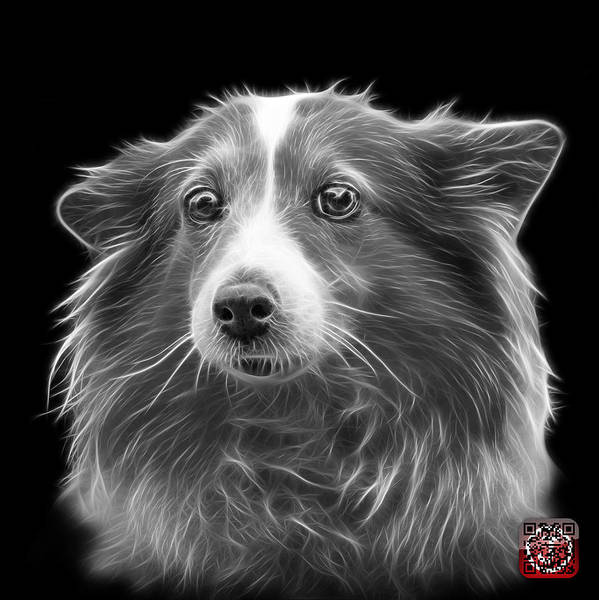 Mixed Media - Greyscale Shetland Sheepdog Dog Art 9973 - Bb by James Ahn