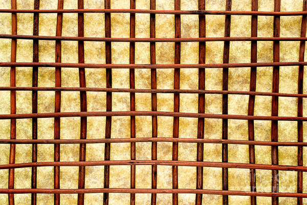 Crisscross Wall Art - Photograph - Grid by Olivier Le Queinec