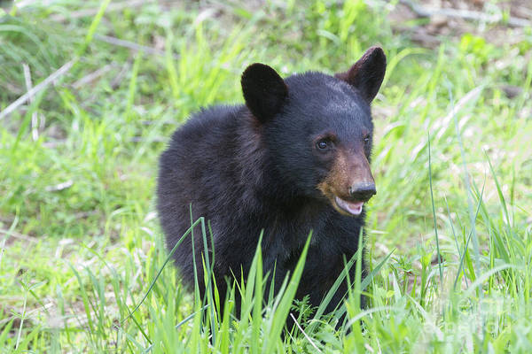 Photograph - Grin And Bear It by Chris Scroggins
