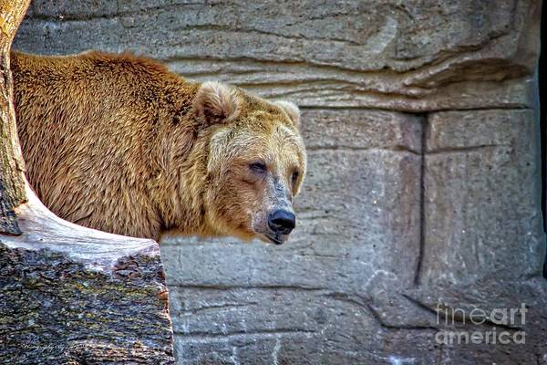 Photograph - Grizzly Bear by Ms Judi