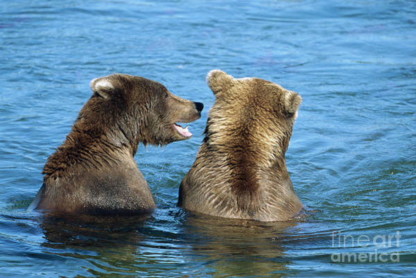 Wall Art - Photograph - Grizzly Bear Talk by Yva Momatiuk and John Eastcott