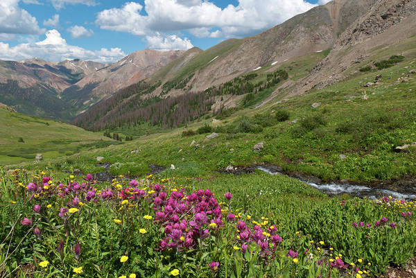 Photograph - Grizzly Gulch Summer Wildflowers And Stream by Cascade Colors