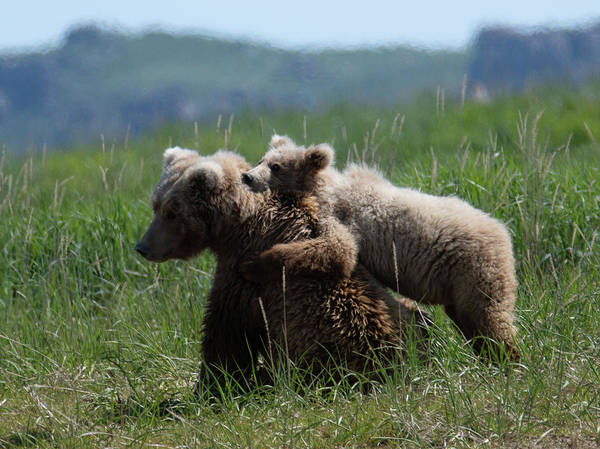 Digital Art -  Grizzly  Mother And A Cub In Katmai National Park by OLena Art - Lena Owens