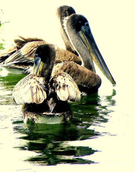 Bird Watcher Photograph - Grocery Shopping by Joe Pratt