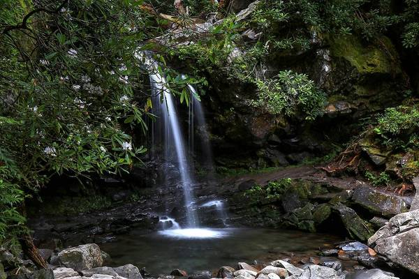 Photograph - Grotto Falls And Rhododendrons by Carol Montoya