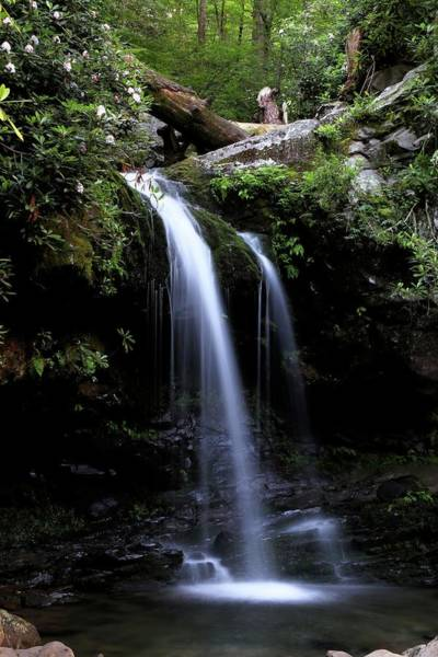Photograph - Grotto Falls And Rhododendrons II by Carol Montoya