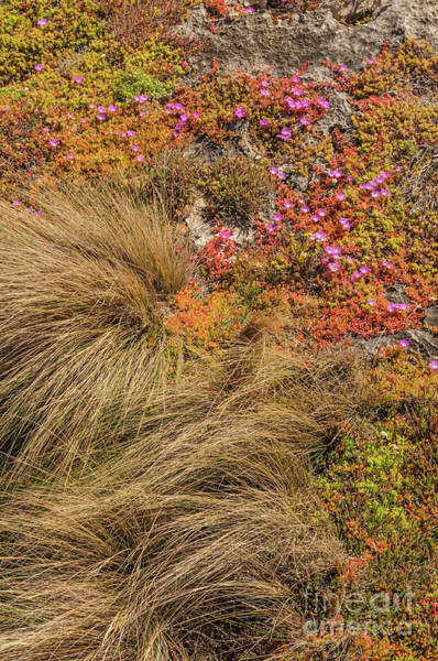 Photograph - Ground Cover 2 by Werner Padarin