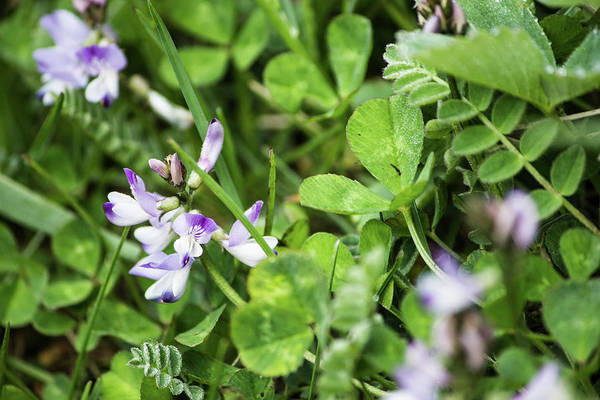 Photograph - Ground Cover by Tyson Kinnison