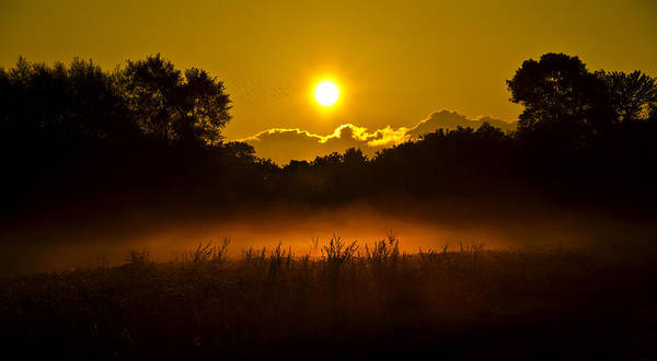 Photograph - Ground Fog by Phil Koch