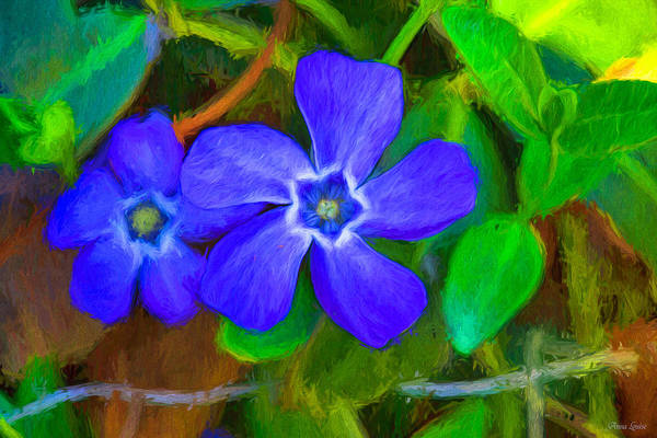 Photograph - Ground Ivy Blue Flowers by Anna Louise