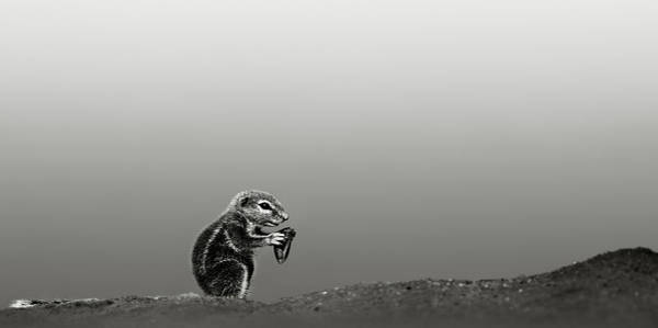 Rodents Photograph - Ground Squirrel by Johan Swanepoel