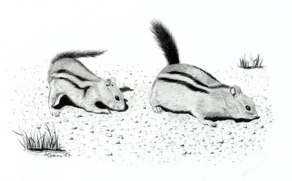 Drawing - Ground Squirrels by Lynn Quinn